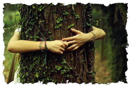 BA 172 - HUG TREE