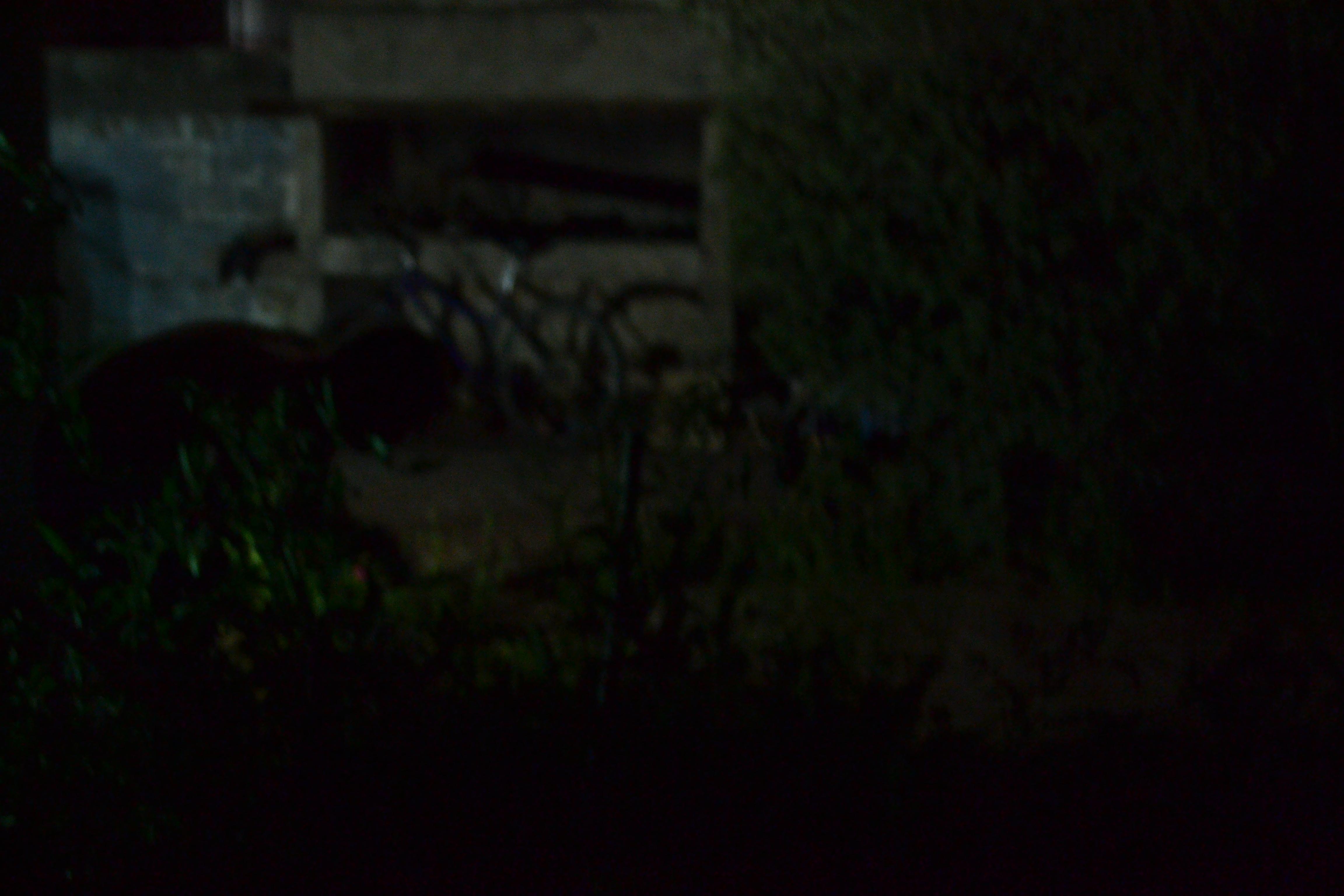 BA 192 - Regando de noche