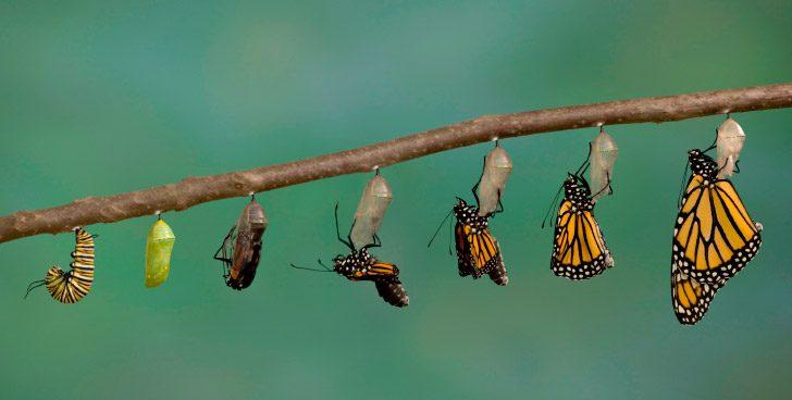 BA 213 - Metamorfosis de la Mariposa