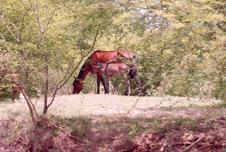 BA 217 - Horses Lovelly