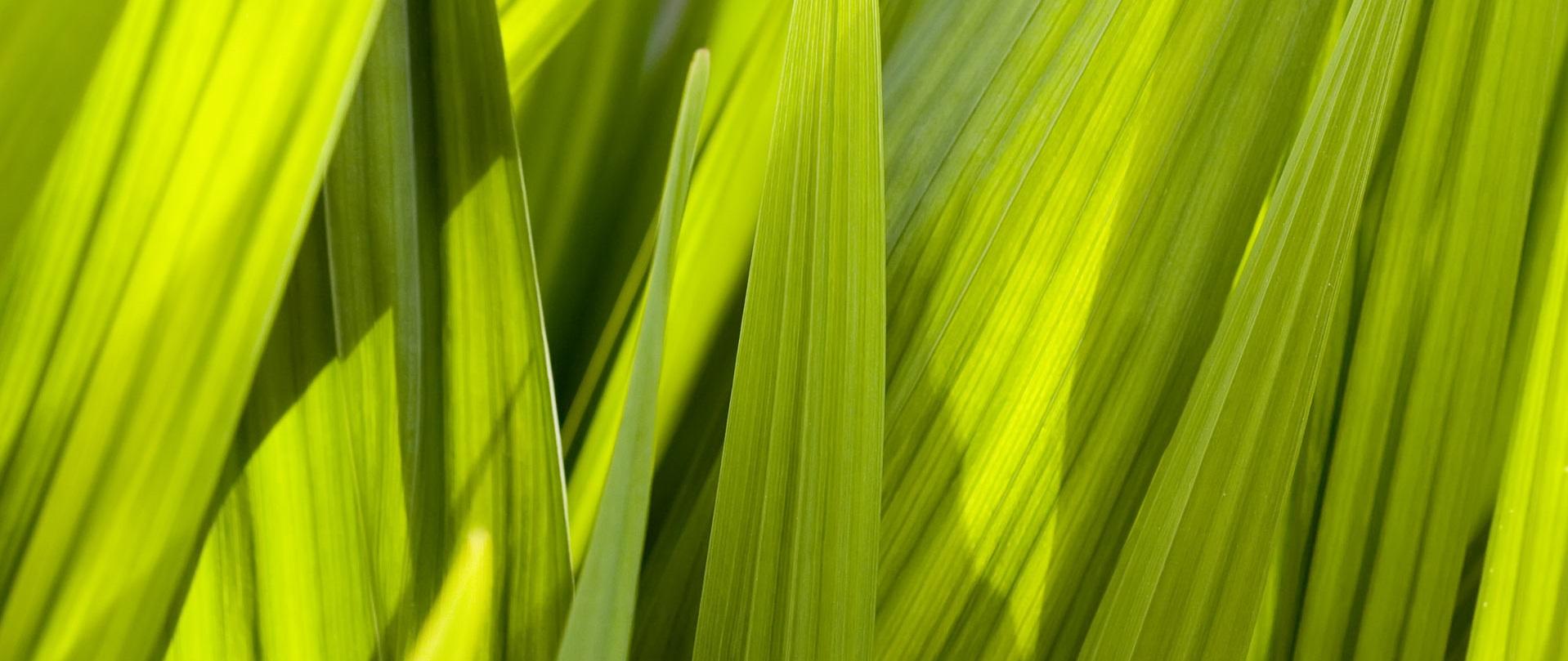 BA 227 - Macro Grass