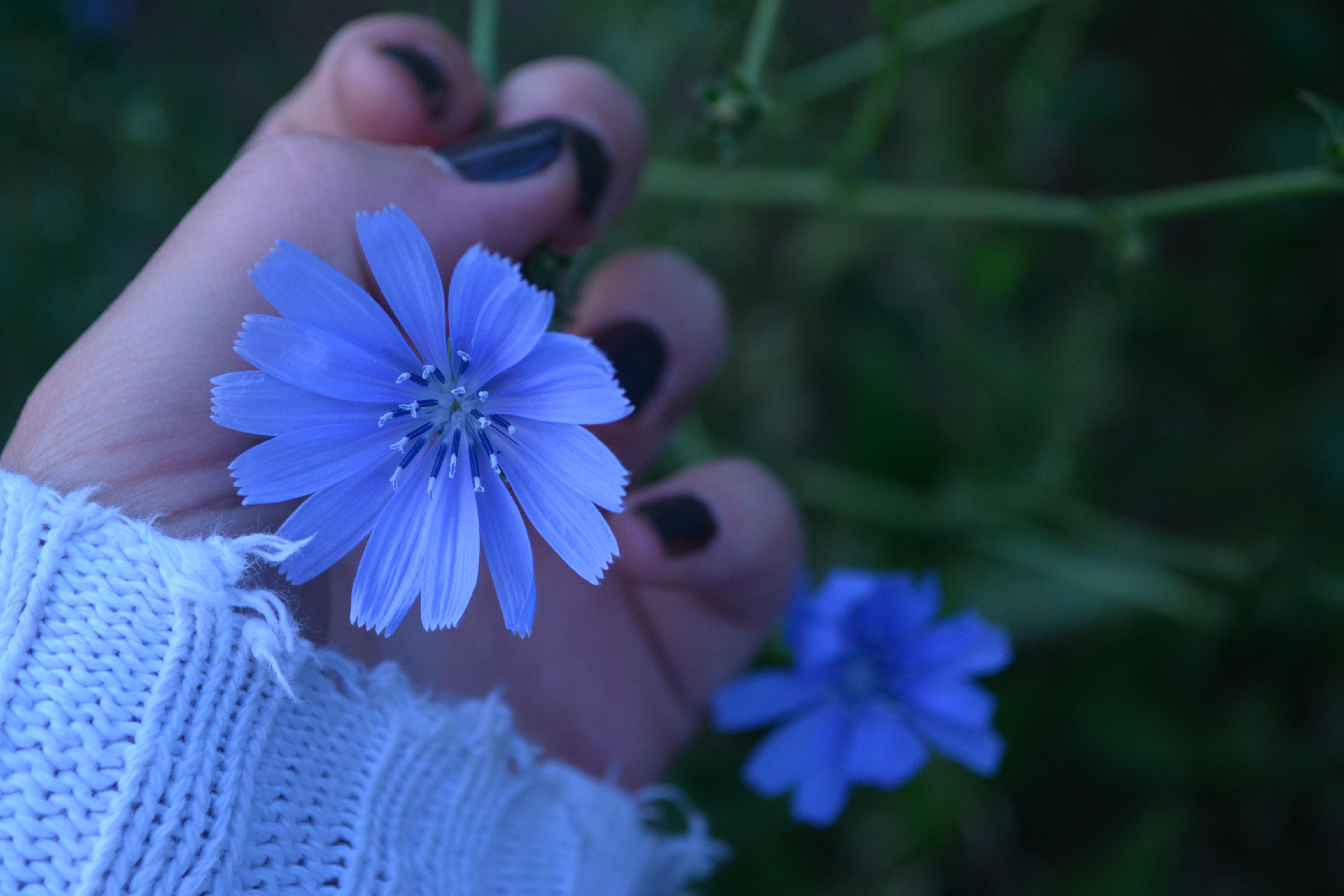 ba-232-blue-flower-by-abby